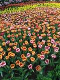 Chang mai flowers festival Stock Photo