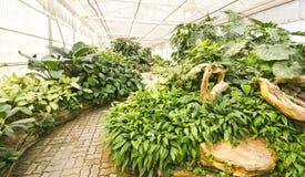 Changchai. Botanical Gardens in modern greenhouse Royalty Free Stock Photo