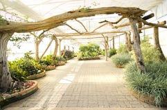 Changchai. Botanical Gardens in modern greenhouse Royalty Free Stock Image