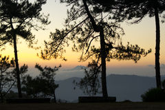 Changchai. Pine Forest Silhoette with sunset Royalty Free Stock Photography