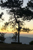 Changchai. Pine Forest Silhoette with sunset Stock Images