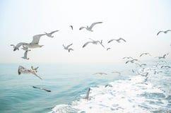Changdaoeiland & Zeemeeuw stock foto's