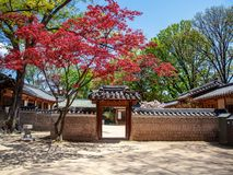 Changdeokgung kunglig slott i Seoul, hemlig trädgård, vårtid Populär destination för lopp i Asien royaltyfri foto