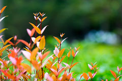Change color leaves Royalty Free Stock Photography