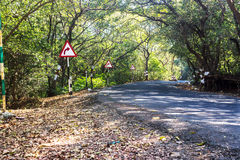 Change in life, long drive concept. A long jungle road surrounded by dense forest and trees with a right turn ahead road sign. A conceptual image, business Stock Image