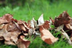 Change of season. Dry leaves on the change of season Stock Photography