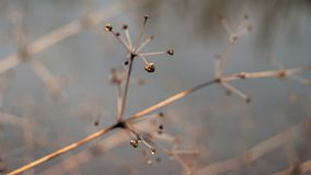 Change of seasons concept: faded stems over frozen icy river or lake in late autumn or early winter.  stock images