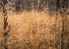 Change of seasons concept: mist droplets on the faded yellow grass, reeds in the late autumn morning.  Stock Images
