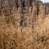 Change of seasons concept: mist droplets on the faded yellow grass, reeds in the late autumn morning.  Stock Photo