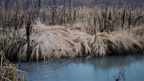 Change of seasons concept: yellow grass, reeds by the frozen icy river or lake in late autumn or early winter.  Royalty Free Stock Photography