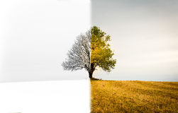 The change between seasons. A lonely tree that is both winter, s. A lonely tree on a field.. The change between winter, spring and fall Stock Photos