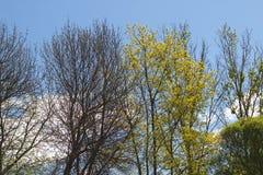 Change of seasons Stock Photography