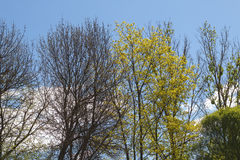 Change of seasons. A change of seasons. spring Stock Photography