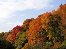 Changement de couleur d'automne Photographie stock libre de droits