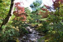 Changement de couleur de feuilles au Japon Photographie stock