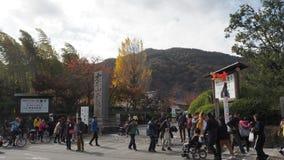 Changement de couleur de feuilles au Japon Photo libre de droits