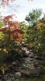 Changement de couleur de feuilles Kyoto Japon Images stock