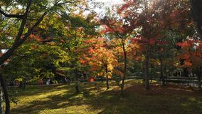 Changement de couleur de feuilles Kyoto Japon Photo stock