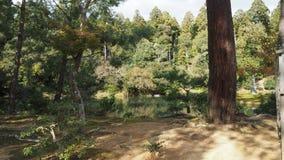 Changement de couleur de feuilles Kyoto Japon Image libre de droits