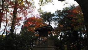 Changement de couleur de feuilles Kyoto Japon Image stock