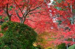 Changement de couleur rouge d'automne Japon Photos stock