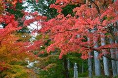 Changement de couleur rouge d'automne Japon Photos libres de droits