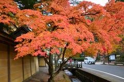 Changement de couleur rouge d'automne Japon Image stock