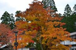 Changement de couleur rouge d'automne Japon Photographie stock libre de droits
