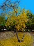 Changement des feuilles pendant la saison d'automne photographie stock libre de droits