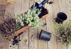Changement des saisons du jardin Photos stock