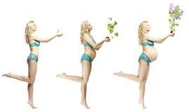 Changements de corps du ` s de femme pendant la grossesse La dynamique du devel Photographie stock libre de droits