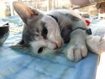 Changer des chiens et des chats dans le jour de rage du monde Photo libre de droits