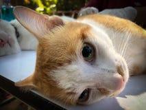 Changer des chiens et des chats dans le jour de rage du monde Photos stock