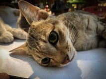 Changer des chiens et des chats dans le jour de rage du monde Photos libres de droits