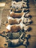 Changer des chiens et des chats dans le jour de rage du monde Image libre de droits