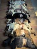 Changer des chiens et des chats dans le jour de rage du monde Image stock