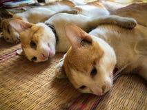 Changer des chiens et des chats dans le jour de rage du monde Photographie stock libre de droits