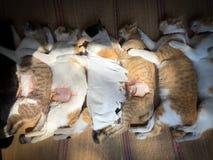 Changer des chiens et des chats dans le jour de rage du monde Photo stock