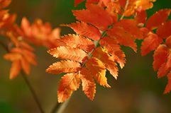 Changes In Nature In The Autumn Royalty Free Stock Images