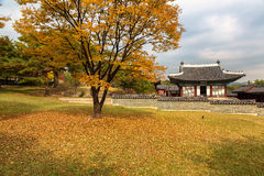 In Changgyeonggung Palace, Seoul Stock Photos