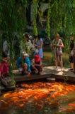 Changhaï, Chine - 17 juin 2017 : poissons de alimentation de carpe de personnes dessus Image libre de droits