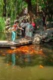 Changhaï, Chine - 17 juin 2017 : poissons de alimentation de carpe de personnes dessus Photographie stock libre de droits