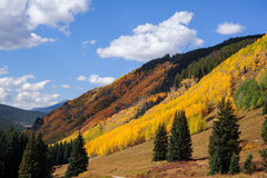 Changing Aspens on Shrine Pass Stock Images