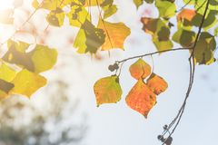 Free Changing Color During Fall Season In Houston, Texas, USA Royalty Free Stock Images - 106585569