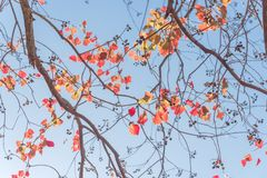 Free Changing Color During Fall Season In Houston, Texas, USA Royalty Free Stock Photos - 106585738