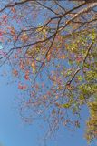 Changing color during fall season in Houston, Texas, USA. Upward perspective vibrant leaves changing color during fall season in Houston, Texas, USA. Tree tops stock images