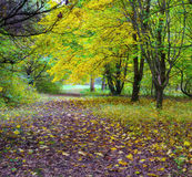 Changing colors. Autumn landscape.  Fallen yellow leaves and a path in the forest. The place is an arboretum in Tiszalok, Hungary. Changing colors. Autumn Stock Photos