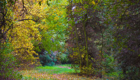 Changing colors. Autumn landscape.  Fallen yellow leaves and a path in the forest. The place is an arboretum in Tiszalok, Hungary. Changing colors. Autumn Stock Photography