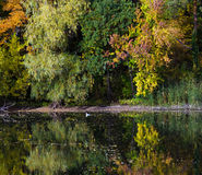 Changing colors. Autumn landscape at the Tisza backwater in Tiszadob, Hungary. Royalty Free Stock Photography