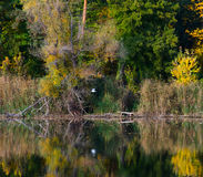Changing colors. Autumn landscape at the Tisza backwater in Tiszadob, Hungary. Royalty Free Stock Photo
